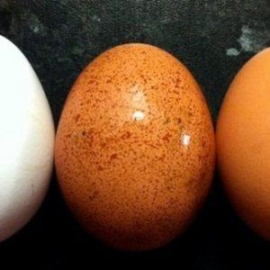 Thường xuyên ăn trứng gà nhưng chắc chắn bạn chưa biết điều này
