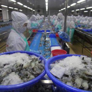 Tôm và cá tra của Việt Nam từ tháng 3.2018 khó vào thị trường Mỹ