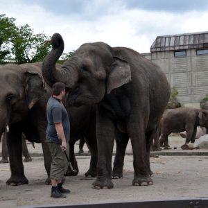 Tierpark và nhiều viện bảo tàng ở Berlin mở cửa miễn phí