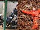 Lừa sang Mỹ, làm nghề bắt cua – Bỏ về quê, giang hồ đuổi sát
