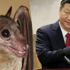 Phát hiện khởi nguồn virus Vũ Hán bí ẩn từ dơi và một động vật đặc biệt?