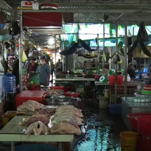 Afraid of Covid-19 pandemic, Vietnam's majority supports the closure of wild animal markets